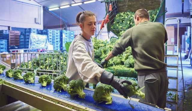 groenteverwerking CAO