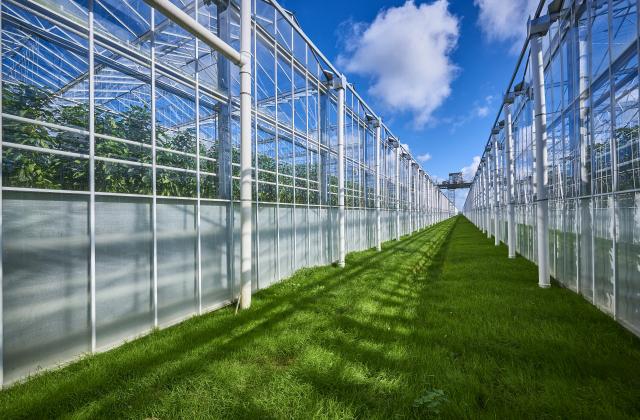 Tegemoetkoming voor kosten hbo-opleidingen in de glastuinbouw