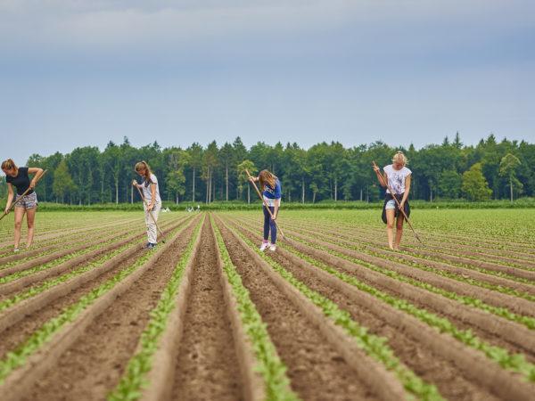 vakantiebaantje agrarische sector