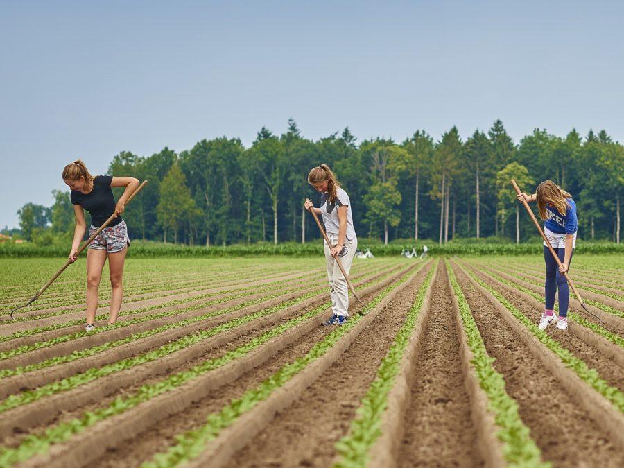 jongeren bijbaantje agrarische sector