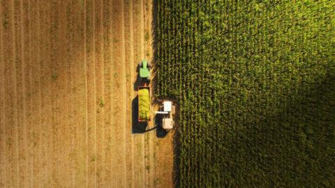 oogstwerkzaamheden agrarische sector