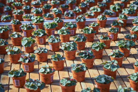 Kleine plantjes in pot