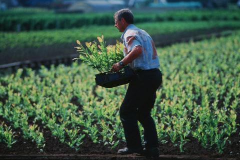 medewerker plantenkwekerij
