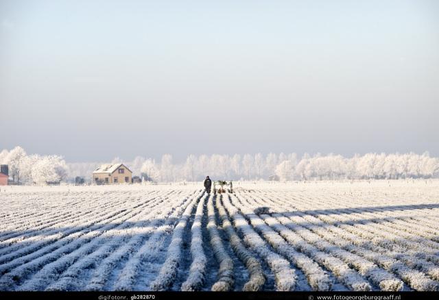 Winterfoto op het land