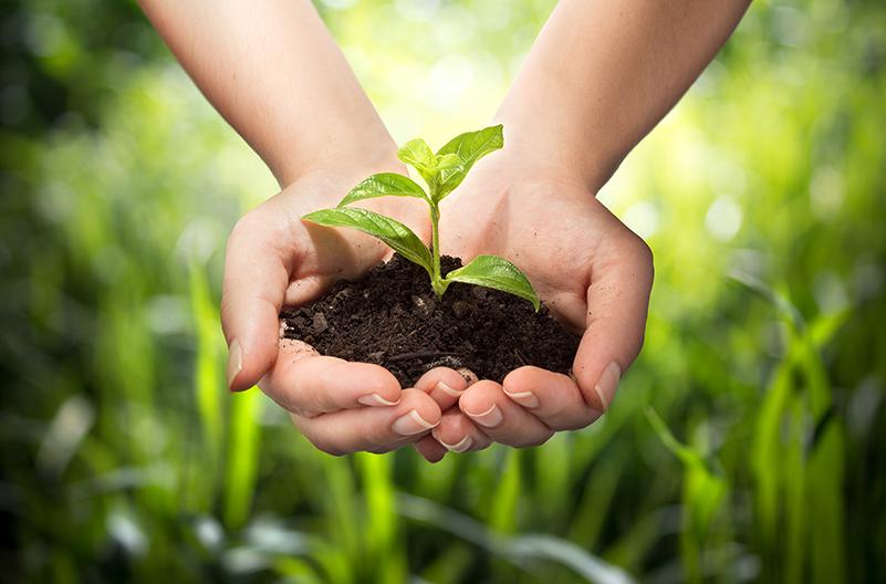 Kluitaarde met groeiende plant