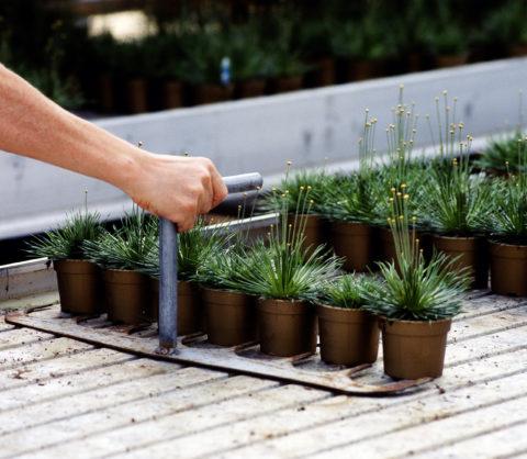 Plantjes in pot
