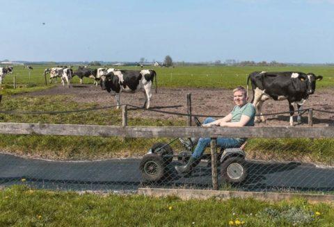 dolgelukkig tussen de koeien