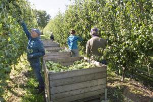 fruittelers met internationale mederwekers