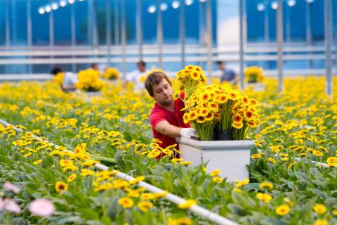 Kleurrijke bloemen in kas