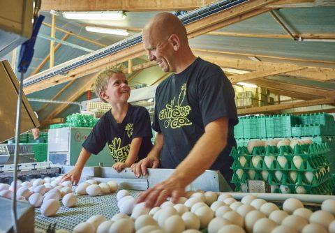 Vader en zoon sorteren eieren