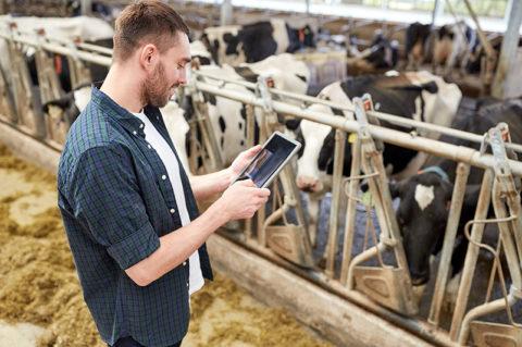 Controle in koeienstal